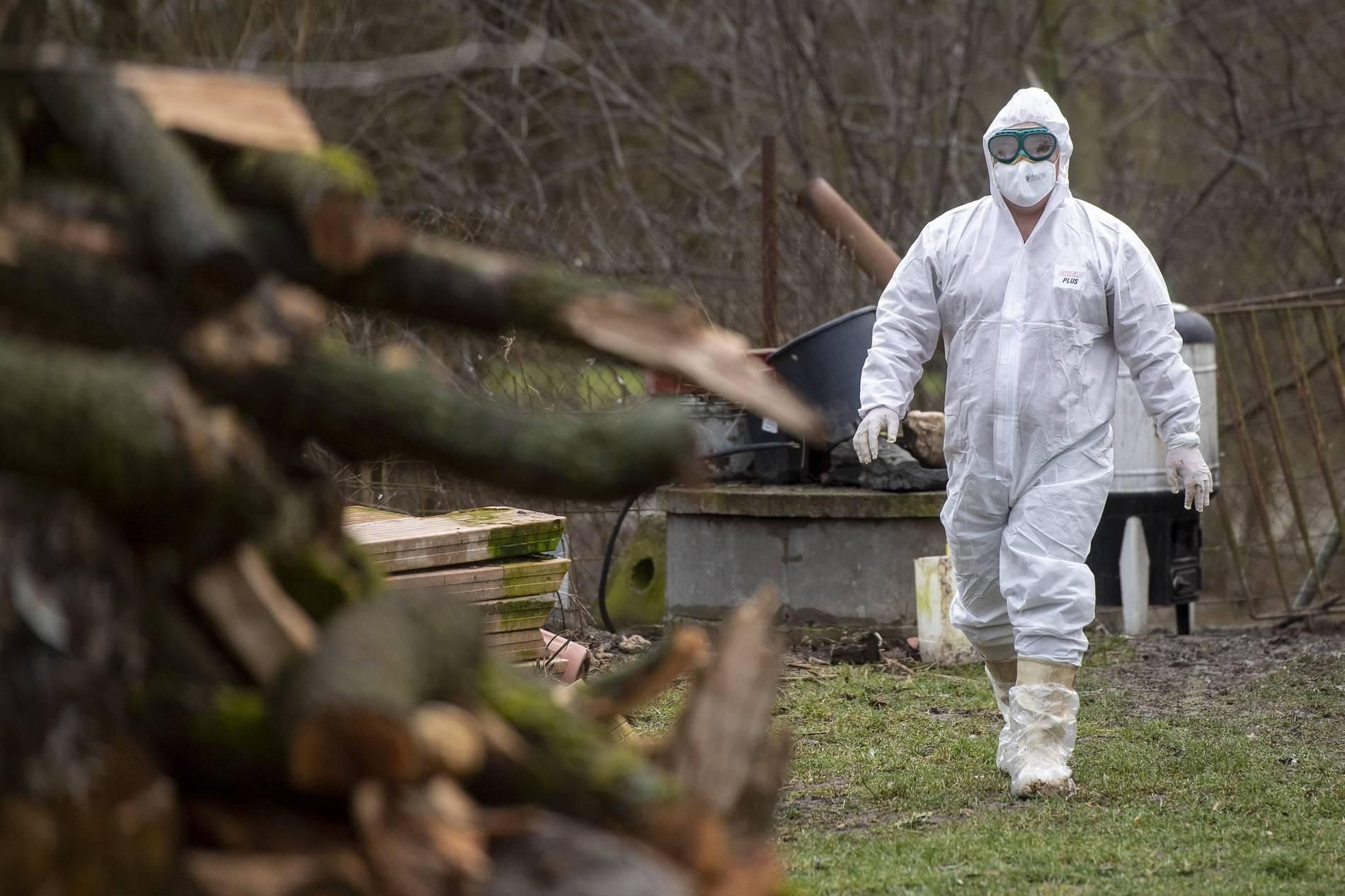 Russland: Erste Übertragung von H5N8-Vogelgrippe-Virus auf Menschen