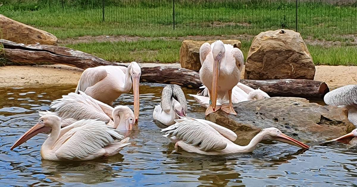 Zoo Köln Geöffnet