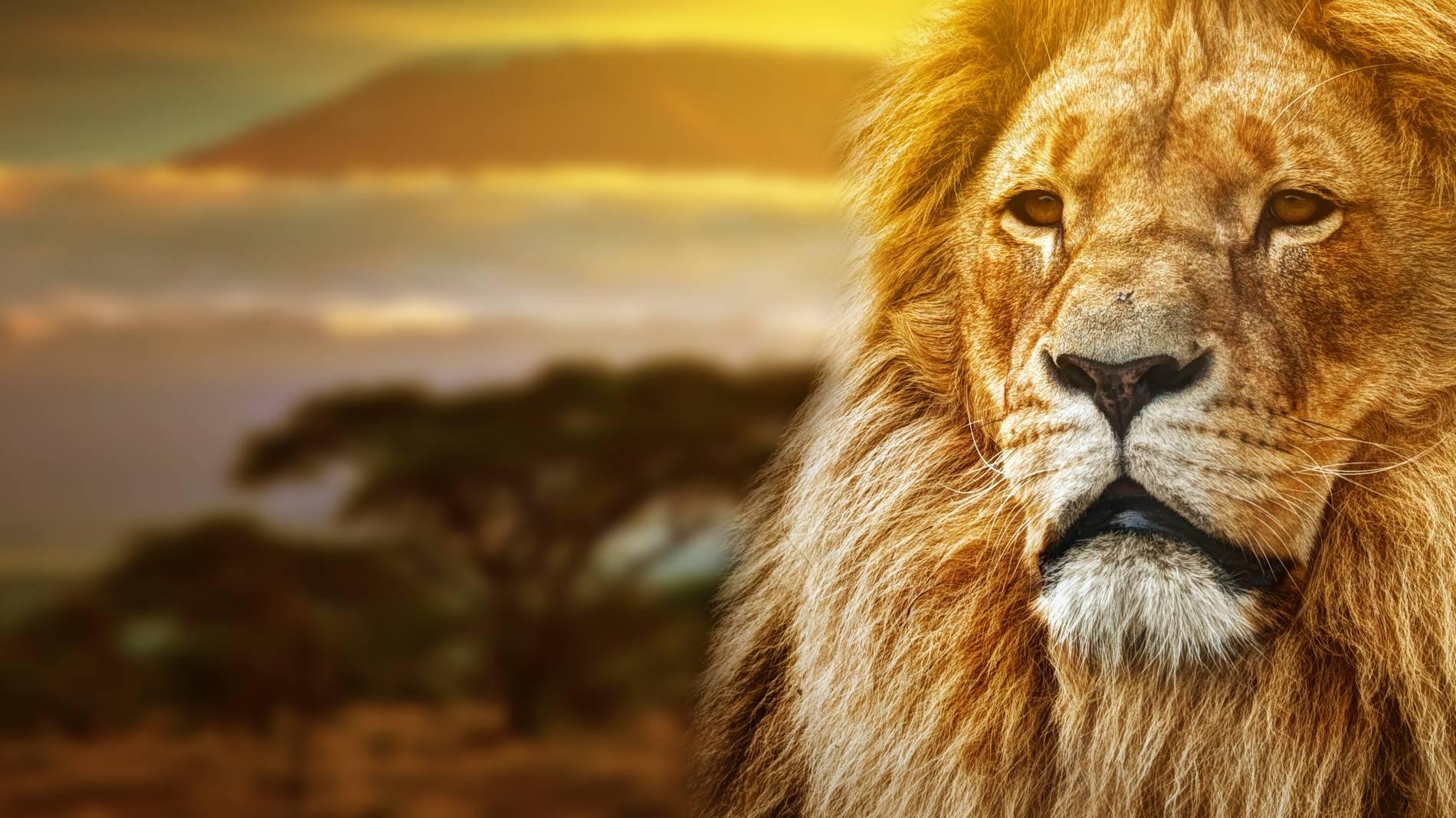 Zusammen löwe und stier frau passen mann Welche Sternzeichen