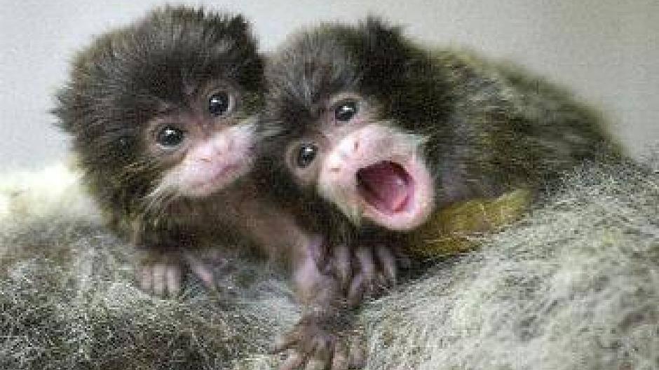 Die Süßesten Tierbabys