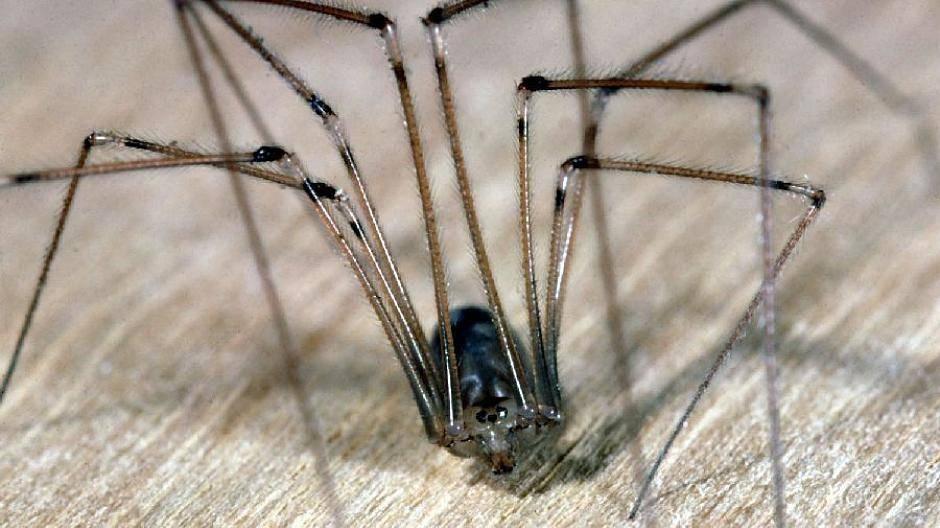 Viele Spinnen Im Haus : spinnen im haus vermeiden tipps f r eine spinnenfreie wohnung ~ Watch28wear.com Haus und Dekorationen