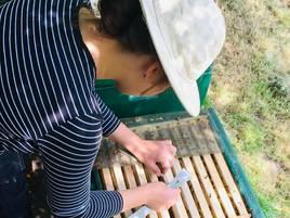 Berufsporträt: Imkern ist mehr als ein Hobby