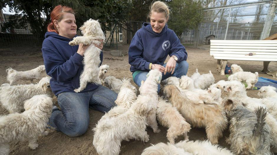Tierherberge Kamp-Lintfort Hunde