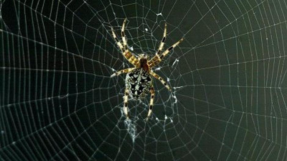 Größtes Spinnennetz