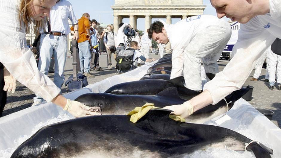 Tote Wale Deutschland