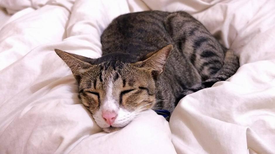 Prächtig Katzenschnupfen: Symptome und Behandlung &LJ_59