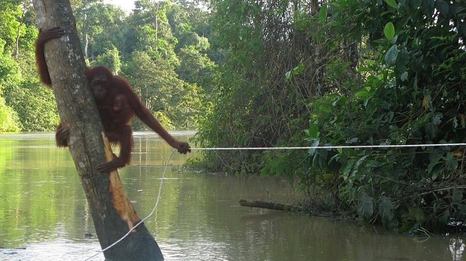99,4 Prozent genetische Gleichheit: Männer ähneln Affen mehr als Frauen
