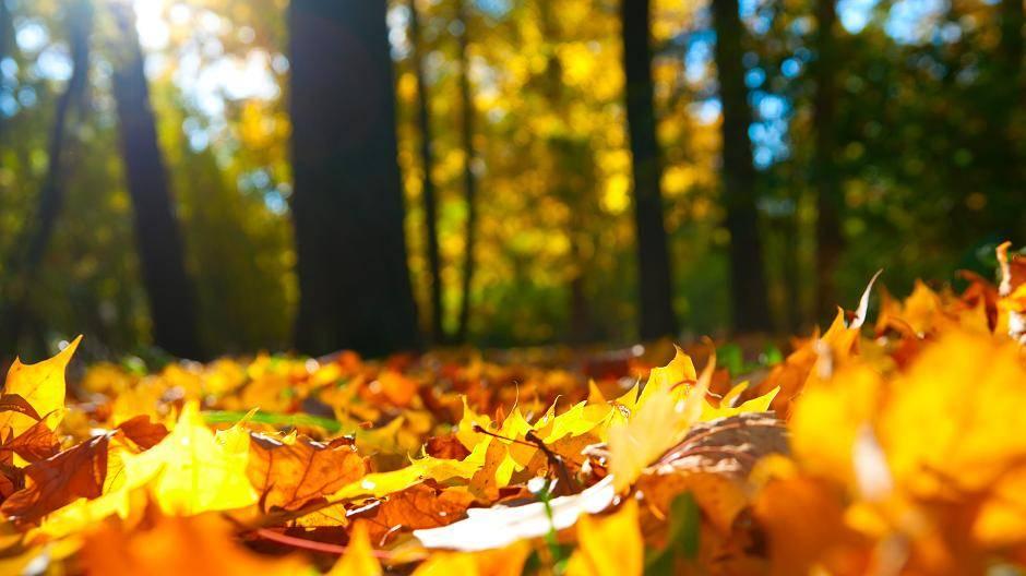 Wir suchen eure schönsten Garten-Herbstbilder