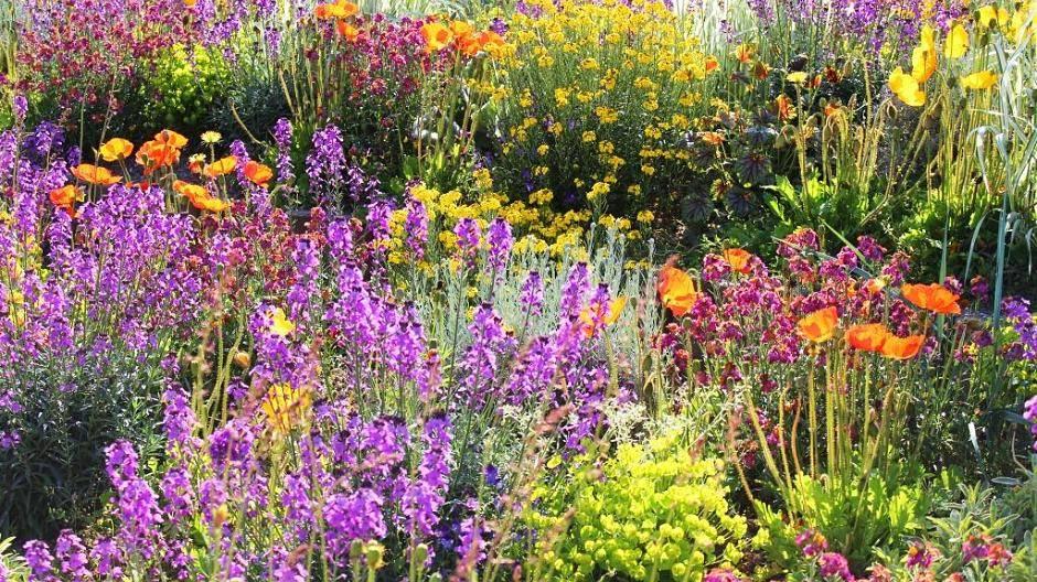Samen Im Eigenen Garten Ernten
