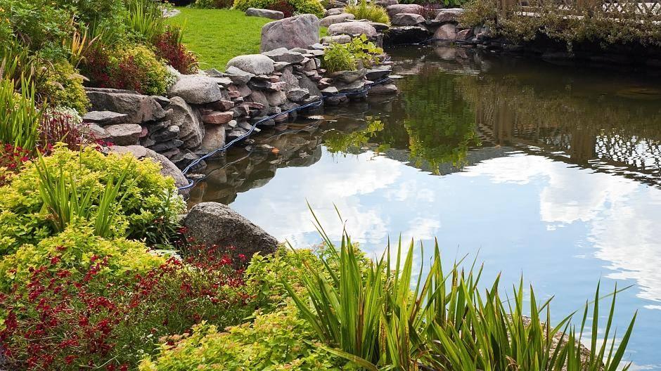 Der Traum Vom Eigenen Teich