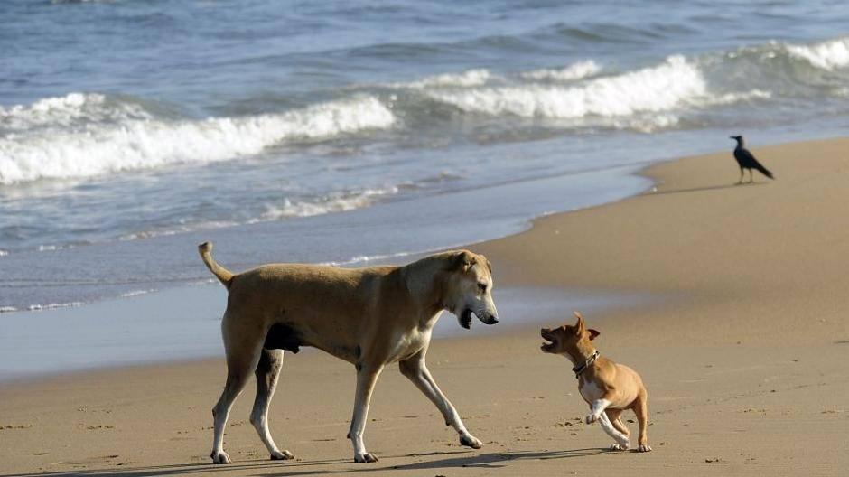dänemark einreise hund