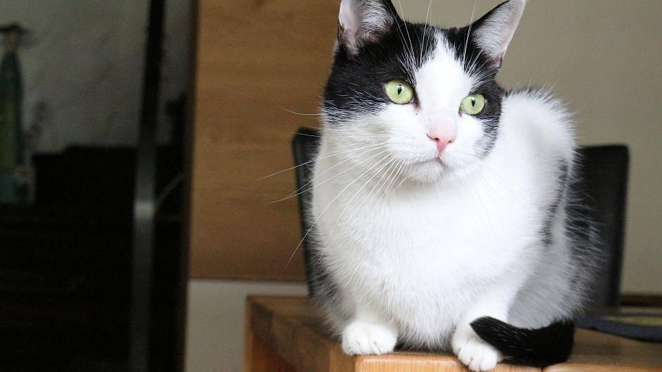 Katzenmädchen Dating-Website57 Jahre alter Schauspieler im Alter von 18 Jahren