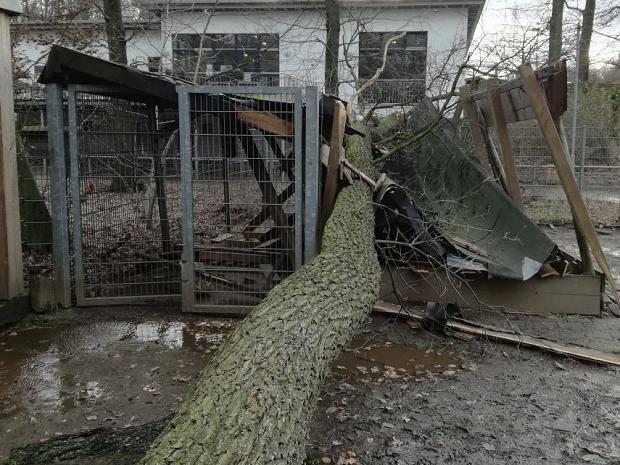 Sturm Friederike Bilder Der Orkan Schäden Aus Nrw Vom Januar 2018