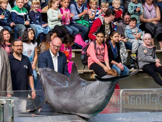 Meine Delfinshow 8