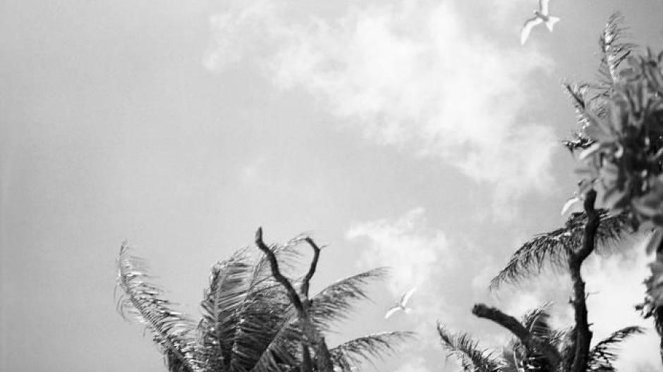 Dating-Website für pazifische Inselbewohner