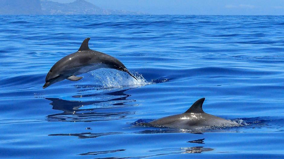 neuss auf dem sprung zur delfinforscherin