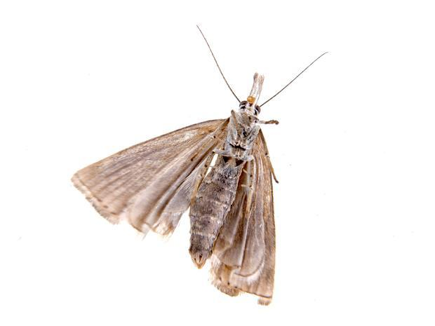 diese insekten und spinnen krabbeln im sommer. Black Bedroom Furniture Sets. Home Design Ideas