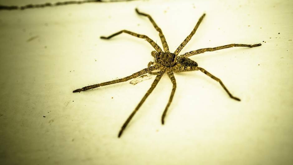 Diese Insekten Und Spinnen Krabbeln Im Sommer