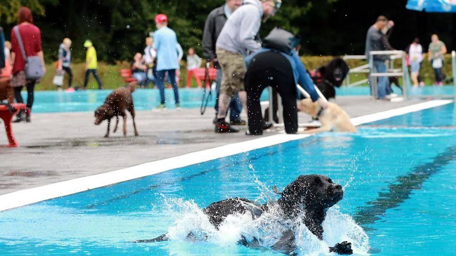 Freibad Hundeschwimmen