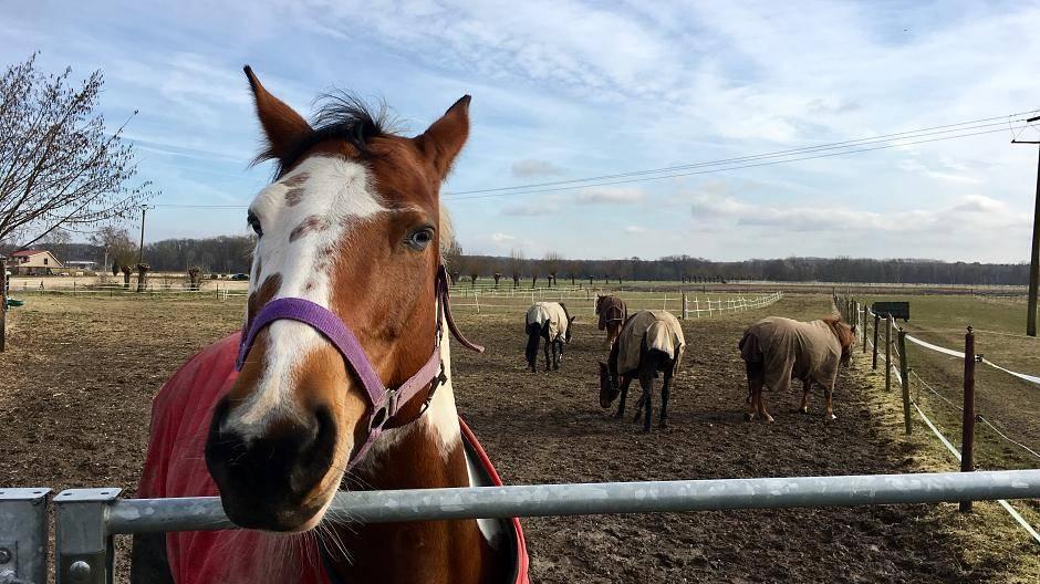 Pferd in rheurdt vergewaltigt kamera filmte tat altavistaventures Images
