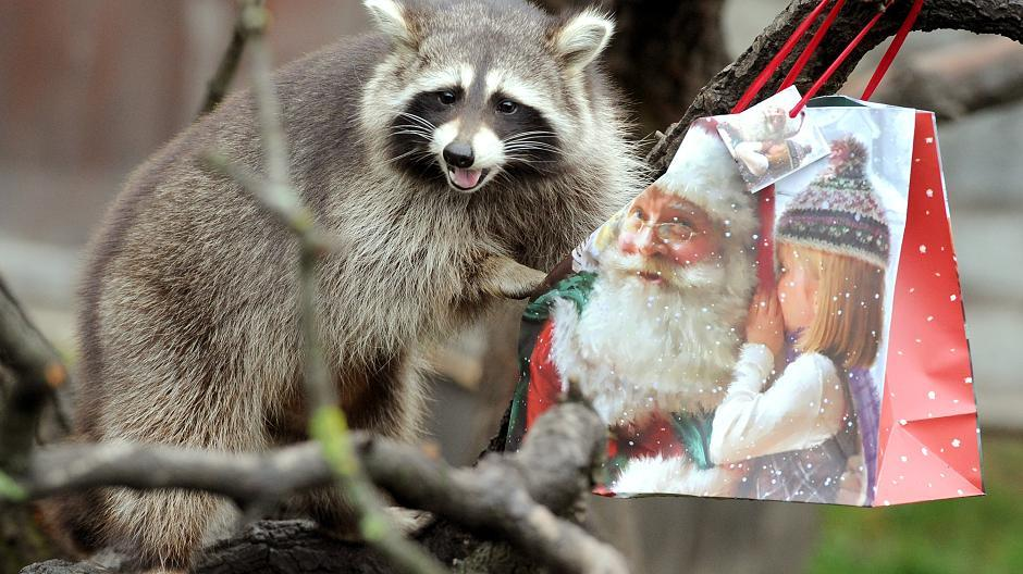 Zoo-Tiere packen Weihnachtsgeschenke aus