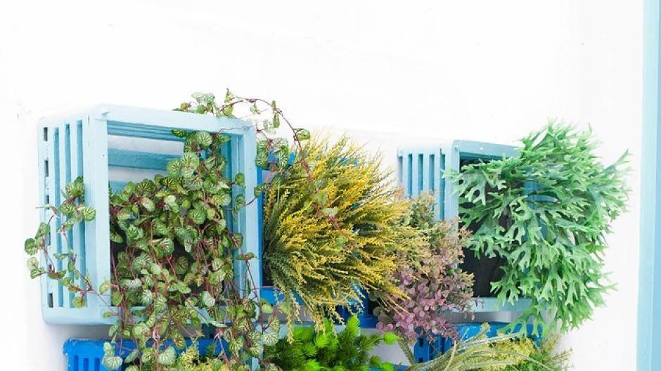Pflanzen an der Wand