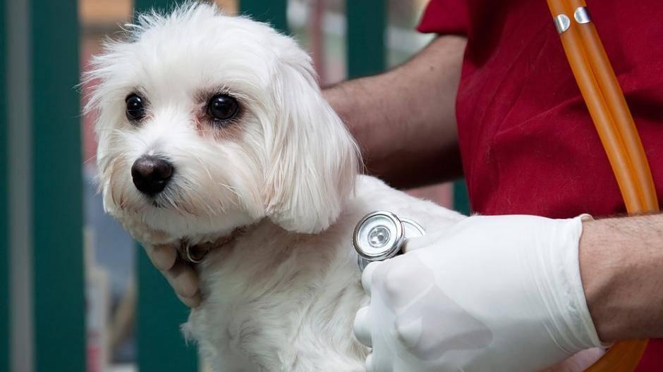Wie Tumorerkrankungen Und Ernährung Beim Hund Zusammenhängen