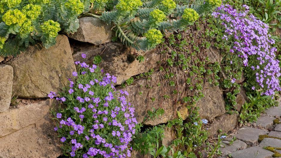 Bunte Blüten Im Steingarten