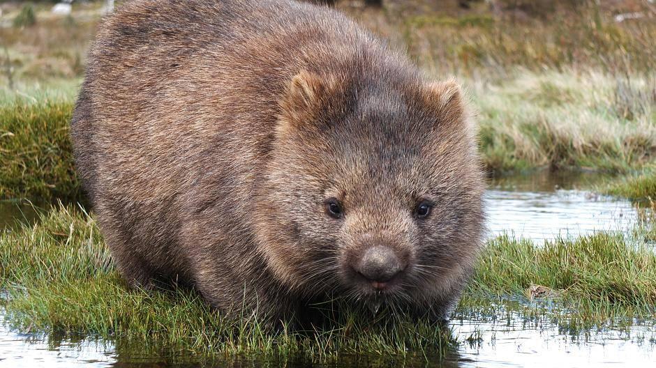 Tasmanische Dating-Seiten