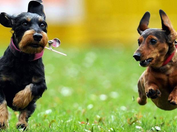 Hundesteuer Nettetal