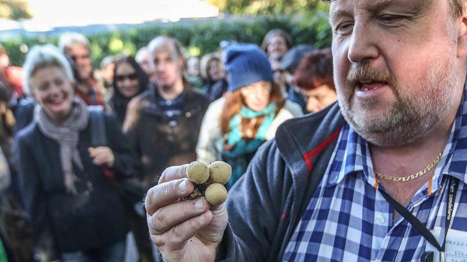 orsoguarhost: Pilze sammeln leverkusen