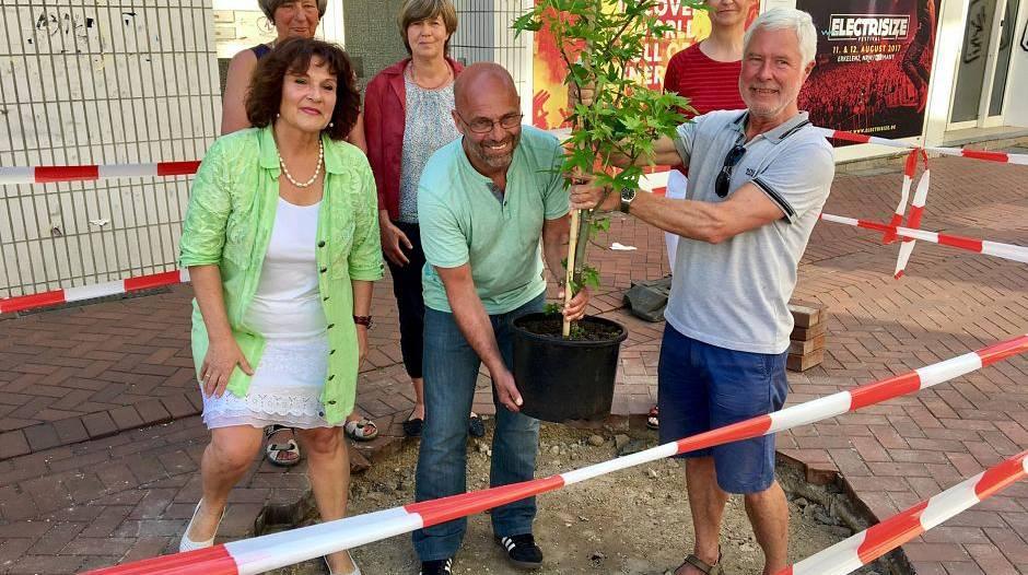 Erkelenz: Grüne verärgert: Stadt handelt, bevor Baum-Antrag beraten ist