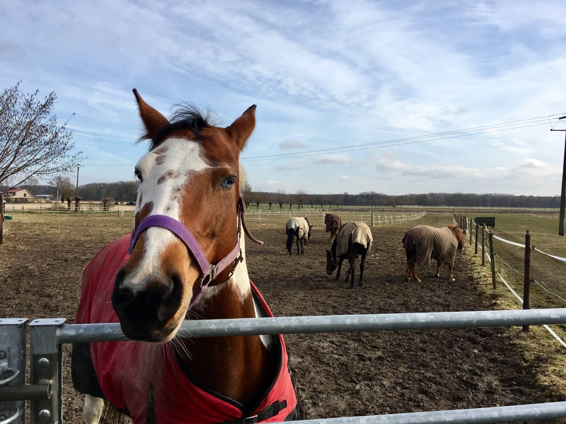 Pferd Vergewaltigt Geldstrafe Für Rheurdter