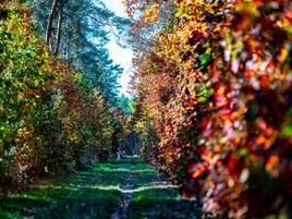 Herbst am Niederrhein : So schön leuchten die Wälder von Xanten bis nach Duisburg