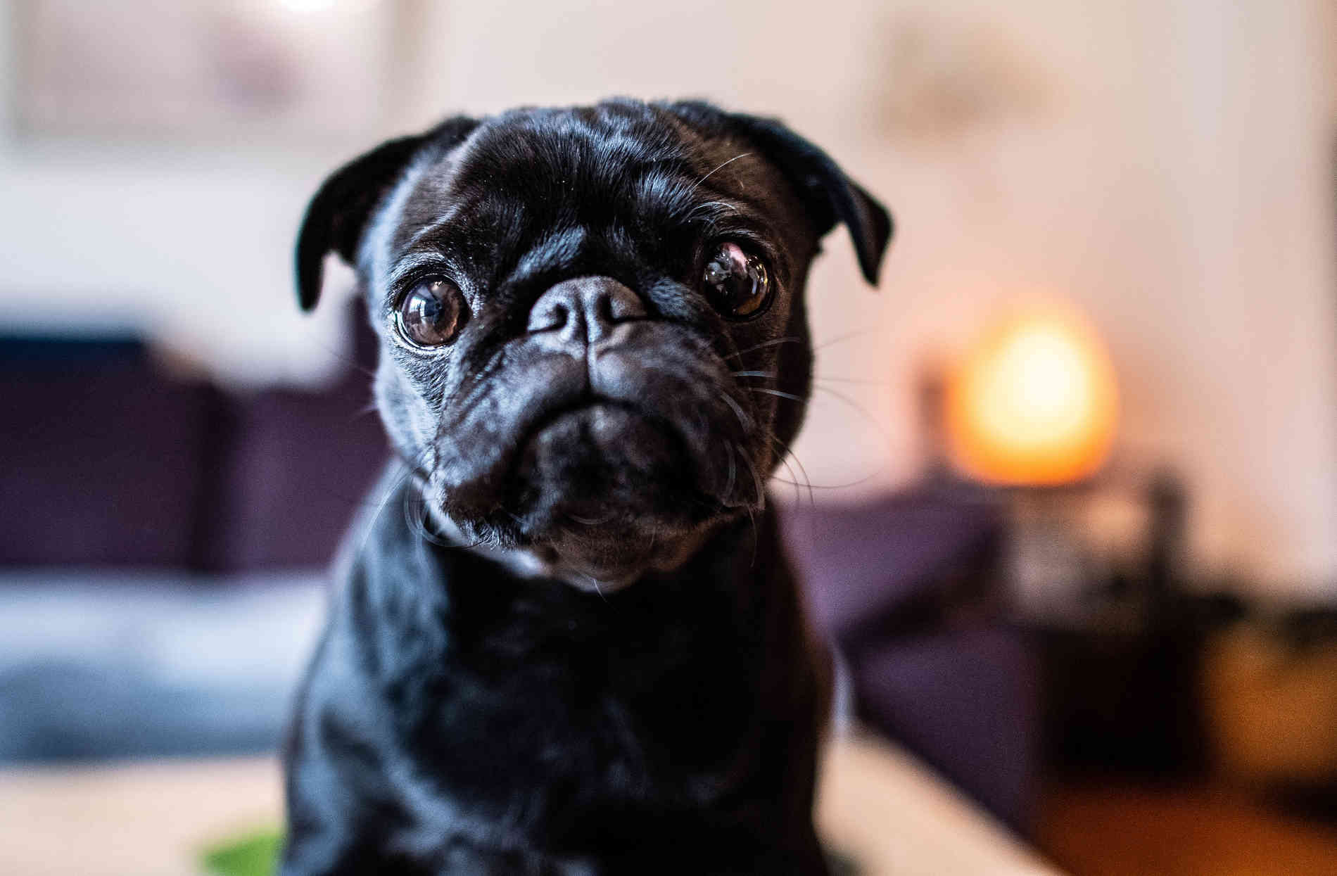 PUg-Dating-Dienst