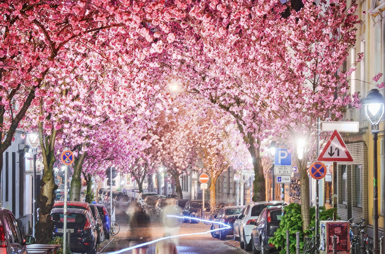 Kirschblüten Dating-Website Login