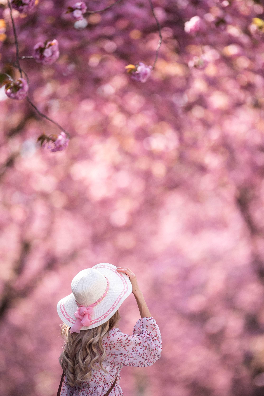 Kirschblüte aus Singles
