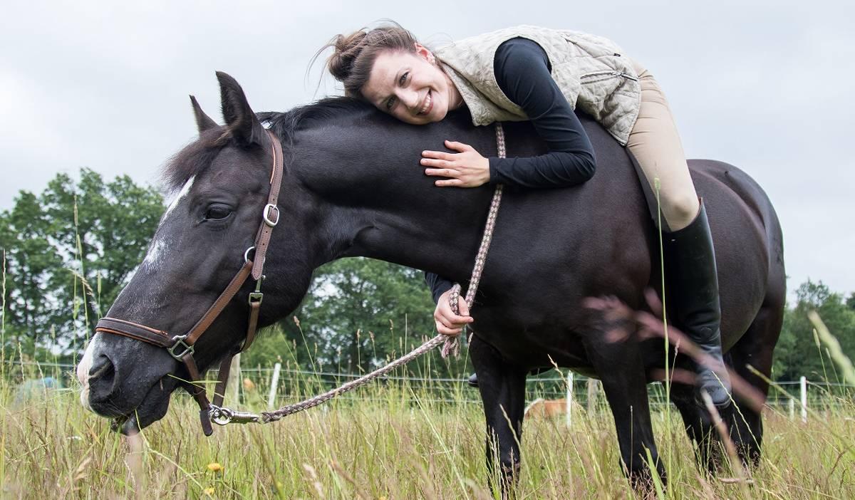 wie viel kostet ein pferd kosten und ihre ursachen
