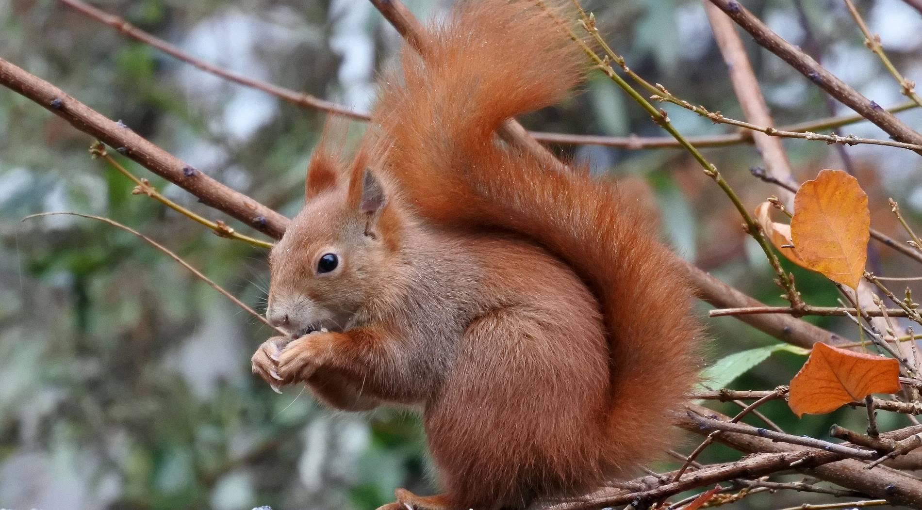 Eichhörnchen verirrt sich in Buchhandlung