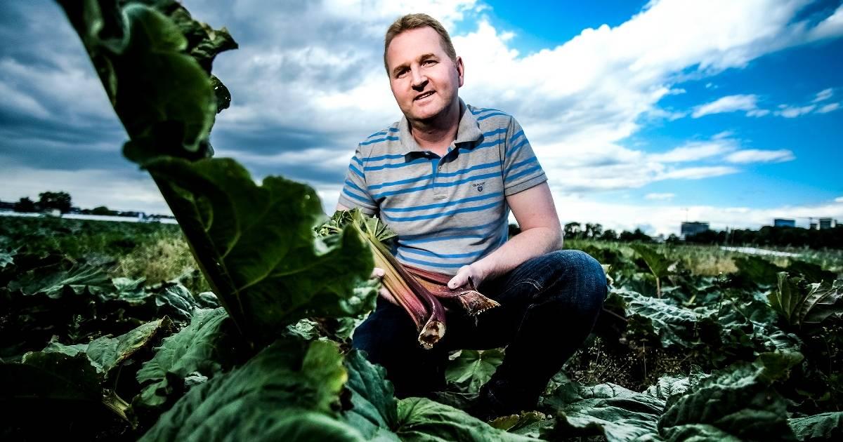 Neue Rezepte für Rhabarber vom Düsseldorfer Bauern Willi Andree