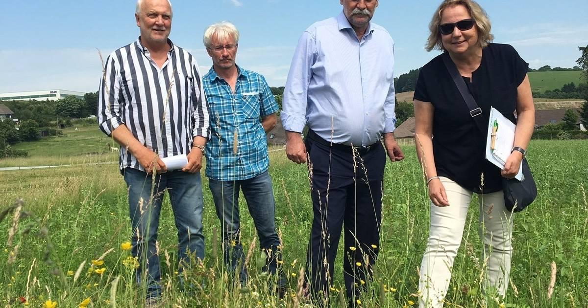 Radevormwald: Stadt stellt zwei größere Weiden für Bienen zur Verfügung