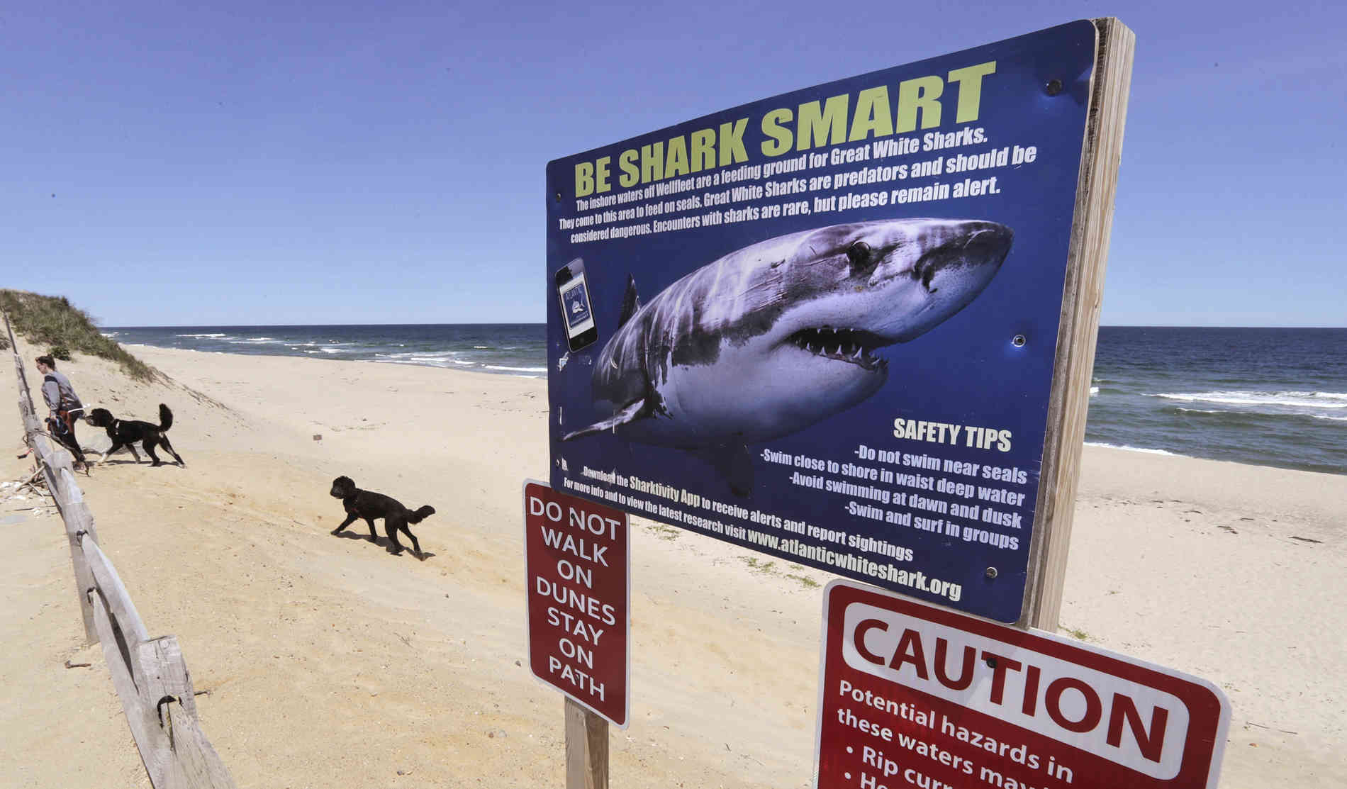 Mann sichtet Hai 20 Meter neben seinen Kindern