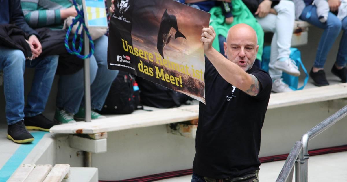 Duisburger Zoo: Tierschutzaktivisten stören Delfin-Show