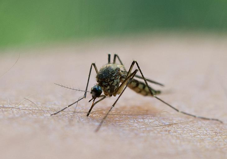 Tipps bei Hitze: Wen Mücken besonders gerne stechen