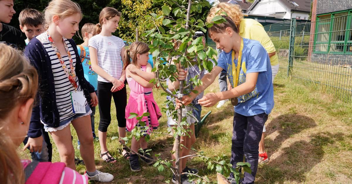 """Wermelskirchen: """"Kinderstadt"""" und """"Ferienkiste"""" pflanzen einen Baum"""