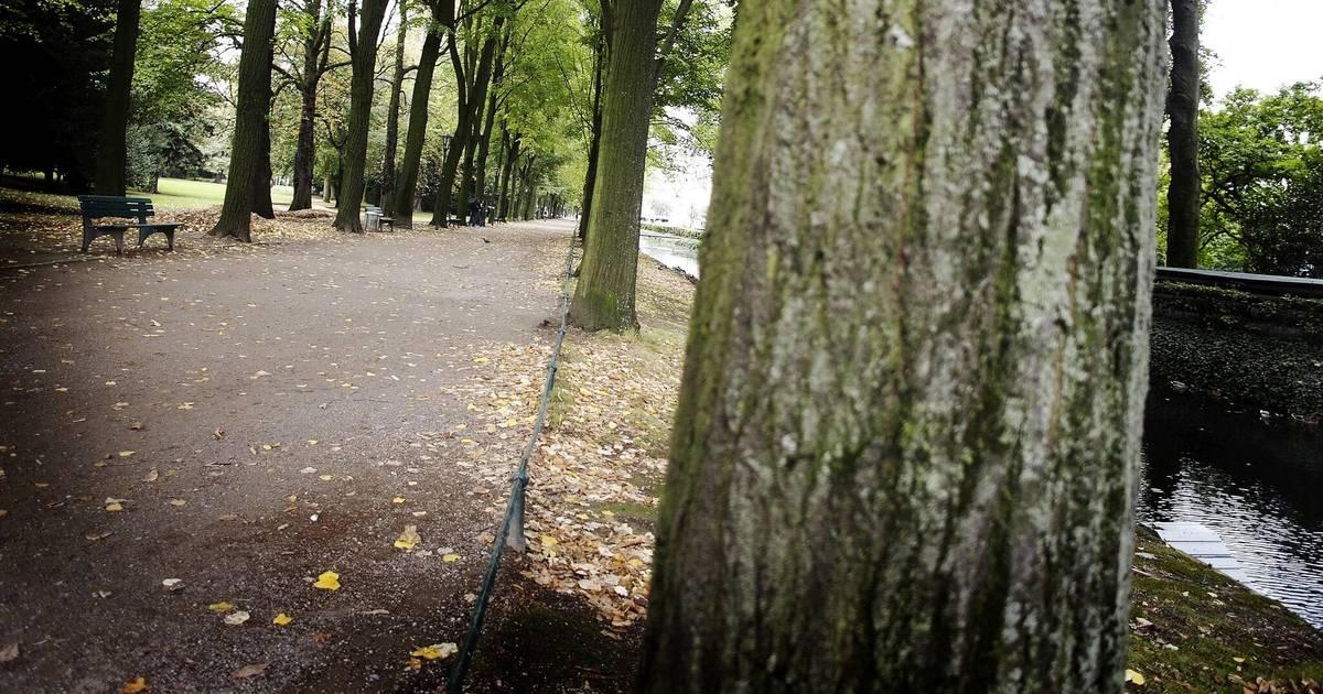 Düsseldorf: Tierschützerin beklagt Verschwinden von Raben