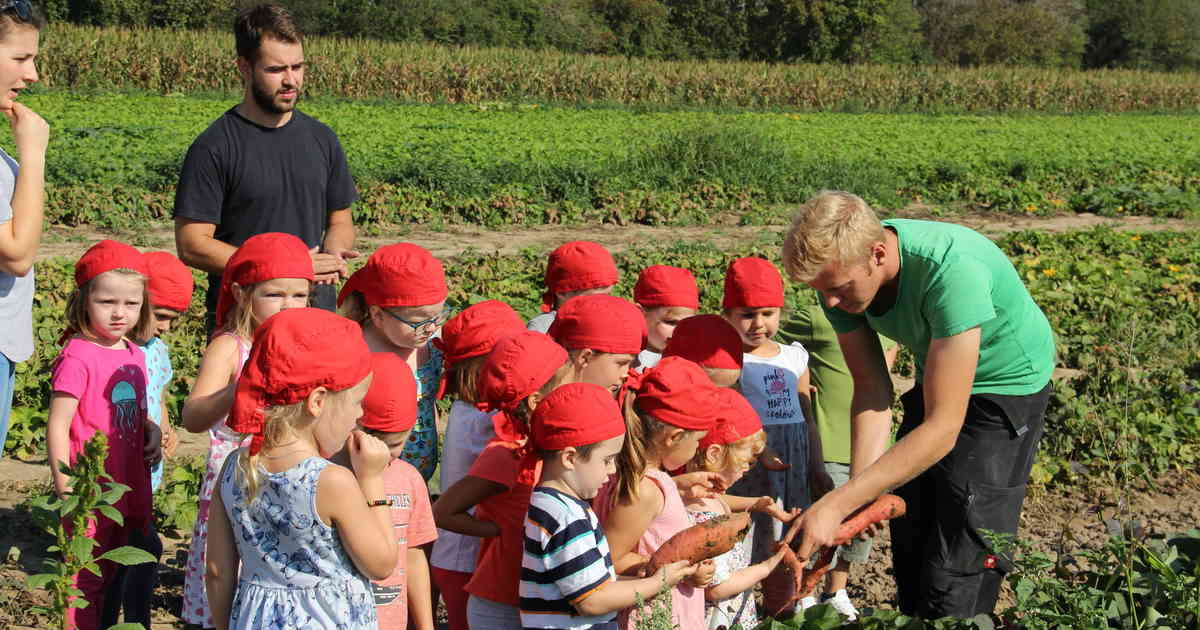 Caritas-Kita Dormagen: Kita-Kinder ernten Gemüse bei Landwirt Simon