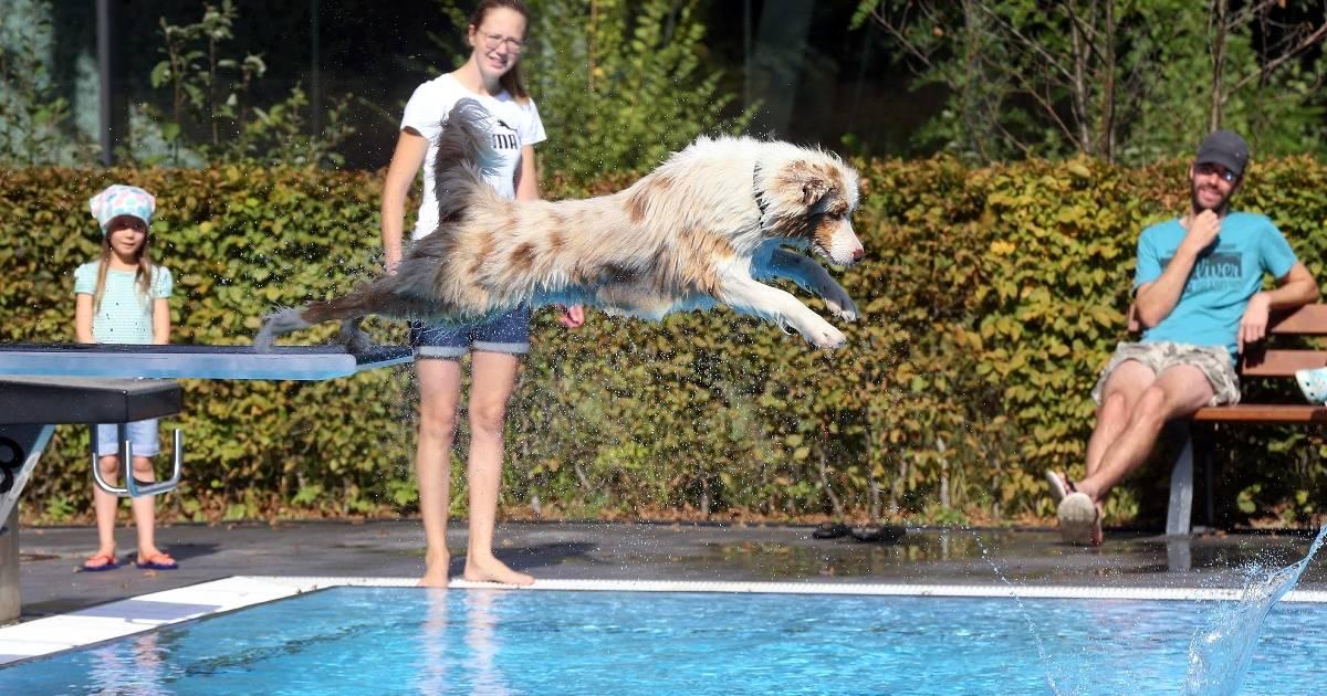Hundeschwimmen im Wiembachbad in Opladen