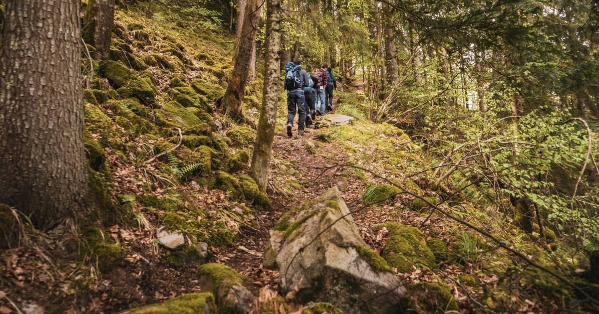Höhenklimaregion Schwarzwald: So gesund sind Vitalwandern und Luftbaden