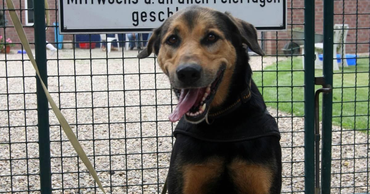 Duisburg: Junge von Hund gebissen - Tante erfand falschen Verdächtigen
